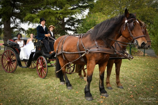 mariage-toulouse-cheval-en-rennes-promenade